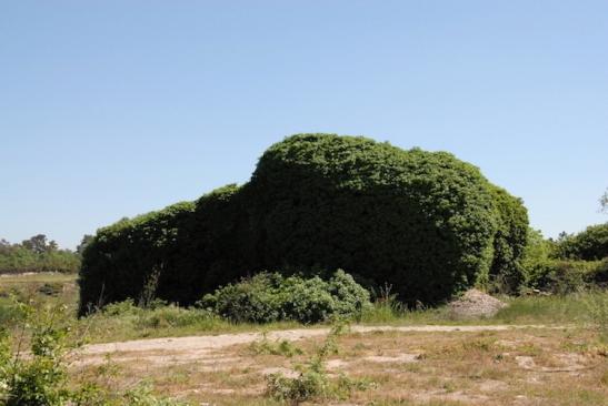 Plantoceno